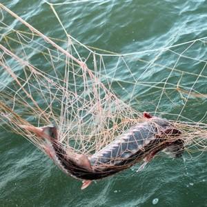 Как получить лицензию на ловлю рыбы сетями