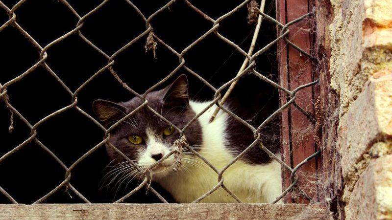 Ответственность по статье 245 УК РФ за жестокое обращение с животными