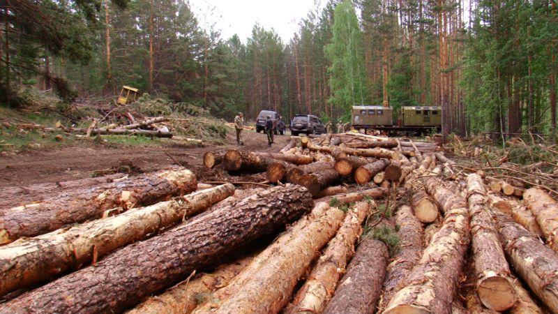 Незаконная порубка леса ук рф
