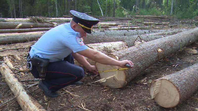 Меры ответственности за незаконную рубку лесных насаждений