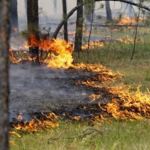 Привлечение к ответственности за уничтожение и повреждение лесных насаждений
